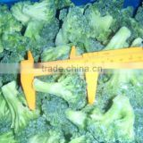 Health Food Halal Food Quick Frozen broccoli