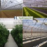 Efficient Polycarbonate Greenhouse for Hydroponic NFT Growing System for Tomato and Lettuce