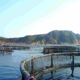 Anti-oxidant Floating Fish Cages Farming Floating Cage