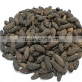 organic clove, clove mother