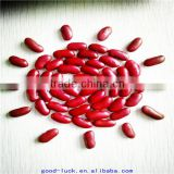 Wholesale dark red kidney beans for can (shanxi)