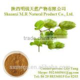 100% natural Beer hop flower extract 10:1,Humulus Lupulus Extract