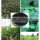 Seaweed Type and Organic Fertilizer Manufacturing Plant