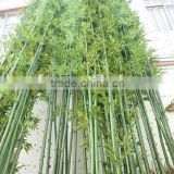 Trees Plant Type ornamental bamboo leaves artificial bamboo