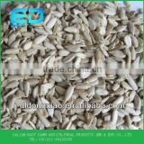 hulled sunflower kernel bakery grade,sunflower seeds that we eat