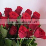 Fresh Cut Red color Rose Flowers