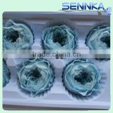 Light Blue Austin preserved rose flower sale by bulk