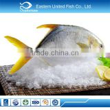 chinese sea wholesale health frozen white pomfret fish