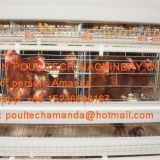 South Africa Poultry Farm A Type Battery Hen Chicken Cage & Laying Egg Chicken Coop with Automatic Chicken Cage for 120 birds in Shed