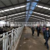 Long span steel structure shed design FOR Poultry or Lifestock farm