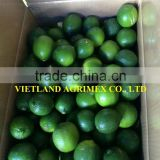 FRESH GREEN LIME/LIME SEEDLESS HIGH QUALITY/BIG SIZE