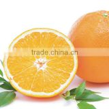 We are supply Fresh Navel Orange with good quality for sale