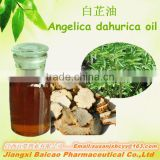Natural Angelica Dahurica Extract/Angelica Dahurica Oil/ Angelica Dahurica Essential Oil