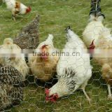 factory bird/chicken cage wire mesh/netting with high quality low price