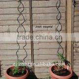 tomato spiral support stakes