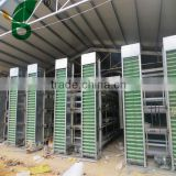 High efficiency full controled automatic collecting egg production equipment for poultry house