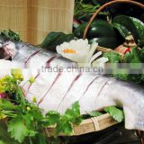 Frozen pangasius steak/pangasius/basa fish/dory fish/cat fish/catfish/mackerel/tilapia/sardine/hilsha/tuna