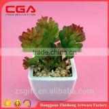Emulate succulent plants tropical plants small bonsai home decoration Plastic emulation succulent plant
