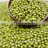Green mung bean Moong dal for sprouting