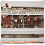 Brazil A Type Automatic Laying Hen Cage & Battery Chicken Cage with 90-200 birds for Poultry Farm