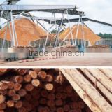 EUCALYPTUS GRANDIS WOOD CHIPS