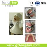 Dental Phantom Head Dental Manikin Fashion Manikin for Sale