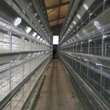 Hot Galvanized Automatic Chicken Cage/Poultry Farm House Design  custom steel structure chicken house