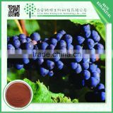 High quality GMP ISO manufacture Natural grape seed extract 40% Polyphenol CAS-84929-27-1