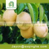 wholesale price fruit pear su