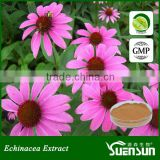 100% natural echinacea purpurea extract powder