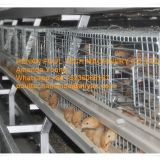 Barbados Chicken Shed A Type Automatic Small Chicken Cage & Small Layer Cage with 10000 Birds with Automatic Manure Clean Machine