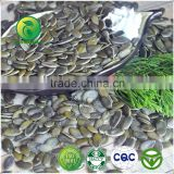 2015 New Crop GWS Pumpkin Seeds Grown Without Shell,China Pumpkin Seed Kernels GWS AA &A For sale