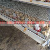 TAIYU baby chick cage from one day old to 16 weeks
