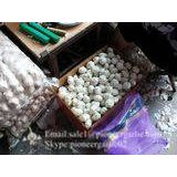 New Crop Chinese 5.5cm Pure White Fresh Garlic small packing in box