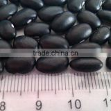 Chinese Small Black Kidney Bean/Black beans/Turtle Bean/Black Kidney Bean( 2010 crop, hps, grade 1. heilongjiang origin)