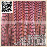Dyed watermelon 90-100cm Large Reeves Pheasant Tail Feather
