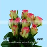 Environmental flowers artificial red rose flower hopeshow in good service from china wholesale fresh cut flowers