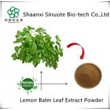 Chinese Supplier Natural Lemon Balm Leaf Extract Powder