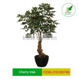 Tropical artificial olive tree with olive fruits