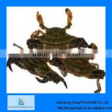 frozen crab blue swimming live crab