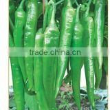 Hybrid green red chilli pepper seeds for sale-Diao Chan
