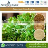 Excellent Quantity 100% Organic Fenugreek Gum Powder for Bulk Buyers