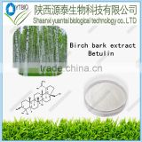 Hot sales Pure Natural Birch bark extract 99% Betulin with factory price