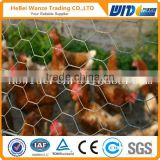 Galvanized chicken coop wire mesh / chicken coop hexagonal wire mesh by TUV Rheinland (factory)