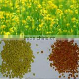 China Factory 100% Grade A Mixed Rape BeePollen Supplier