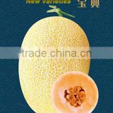 High quality Hybrid Hami Melon Seeds Cantaloupe melon seed muskmelon seeds for planting-Bao Dian