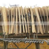 Eucalyptus Core Veneer from Vietnam