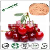 Direct manufacturer supply Natural high quality acerola cherry extract