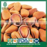 Wholesale Natural and Pure Organic Cedar Open Pine Nuts in Shell