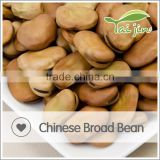 Factory wholesale provide broad beans with competitive price